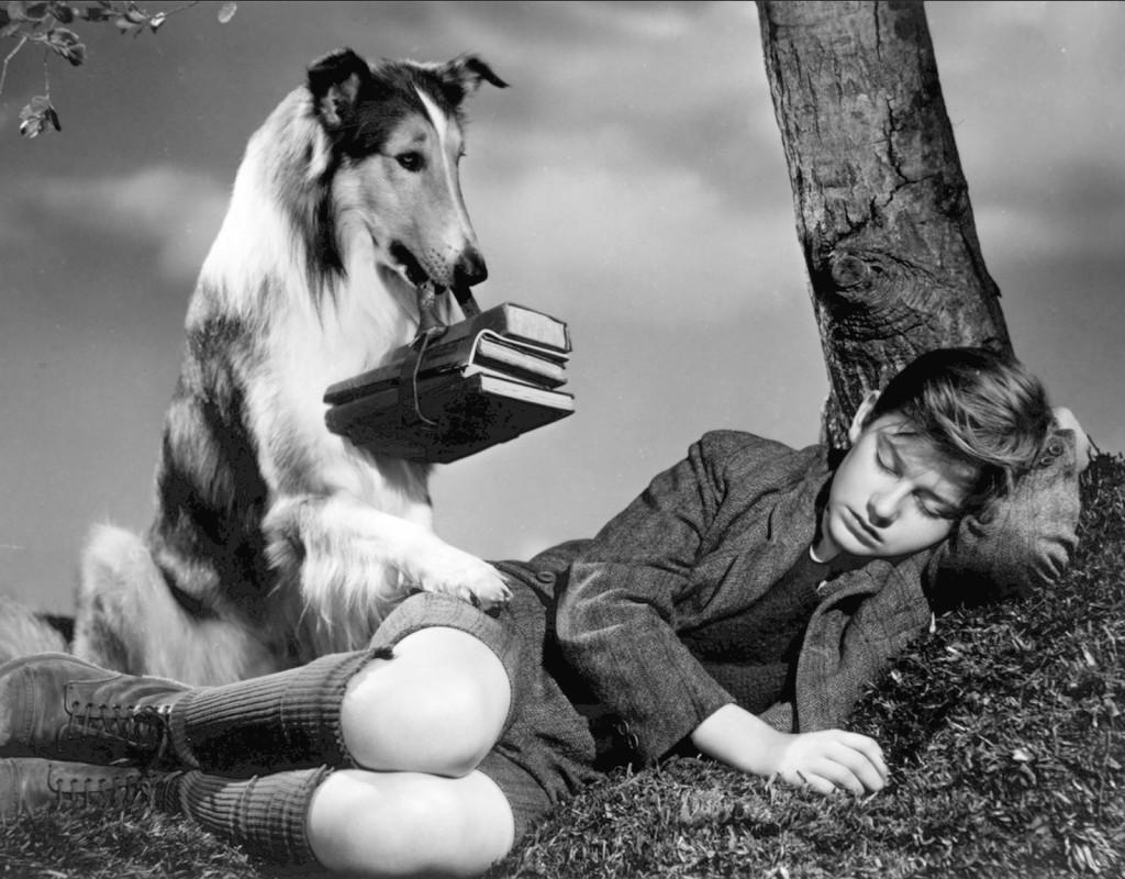 Lassie på äventyr, Fred M. Wilcox (1943)